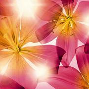 """Фото обои из коллекции """"komar"""" обои """"floral"""""""
